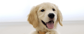 Dog Lovers SG