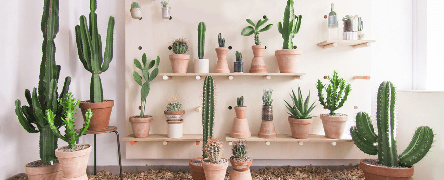 Succulents and Cacti Plant Enthusiasts