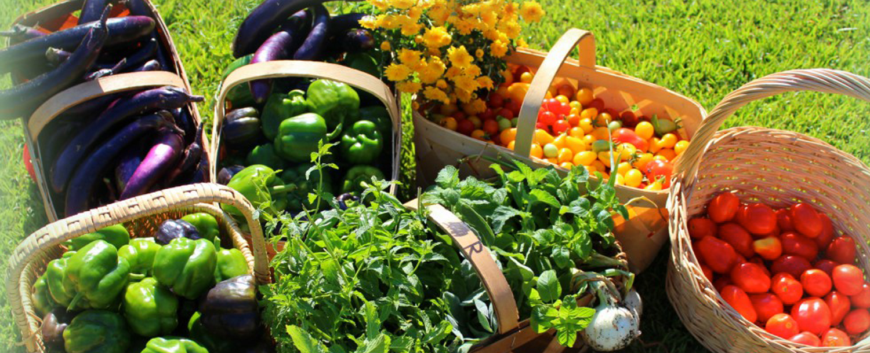 Grow your own Food Garden Club