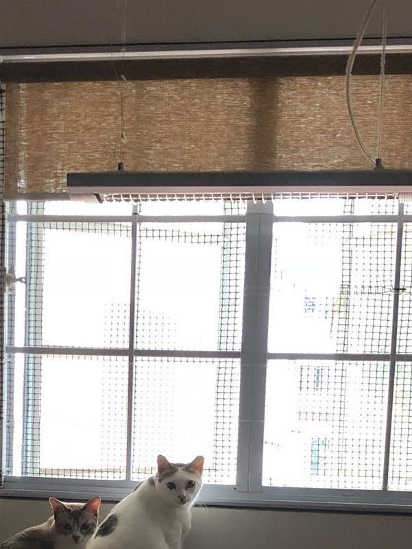 Meshing your windows / cat proofing your house