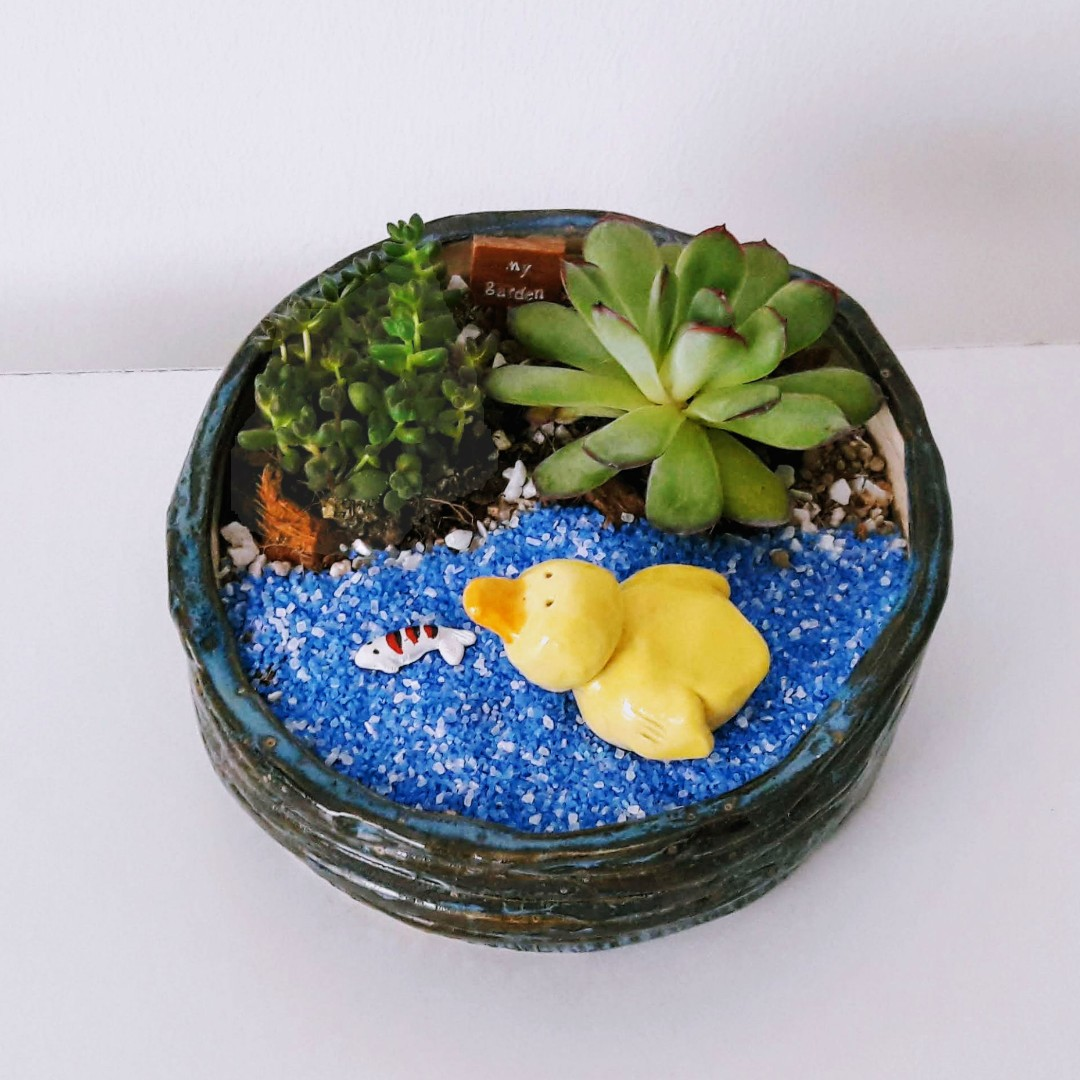 Looking for beautiful TERRARIUMS?