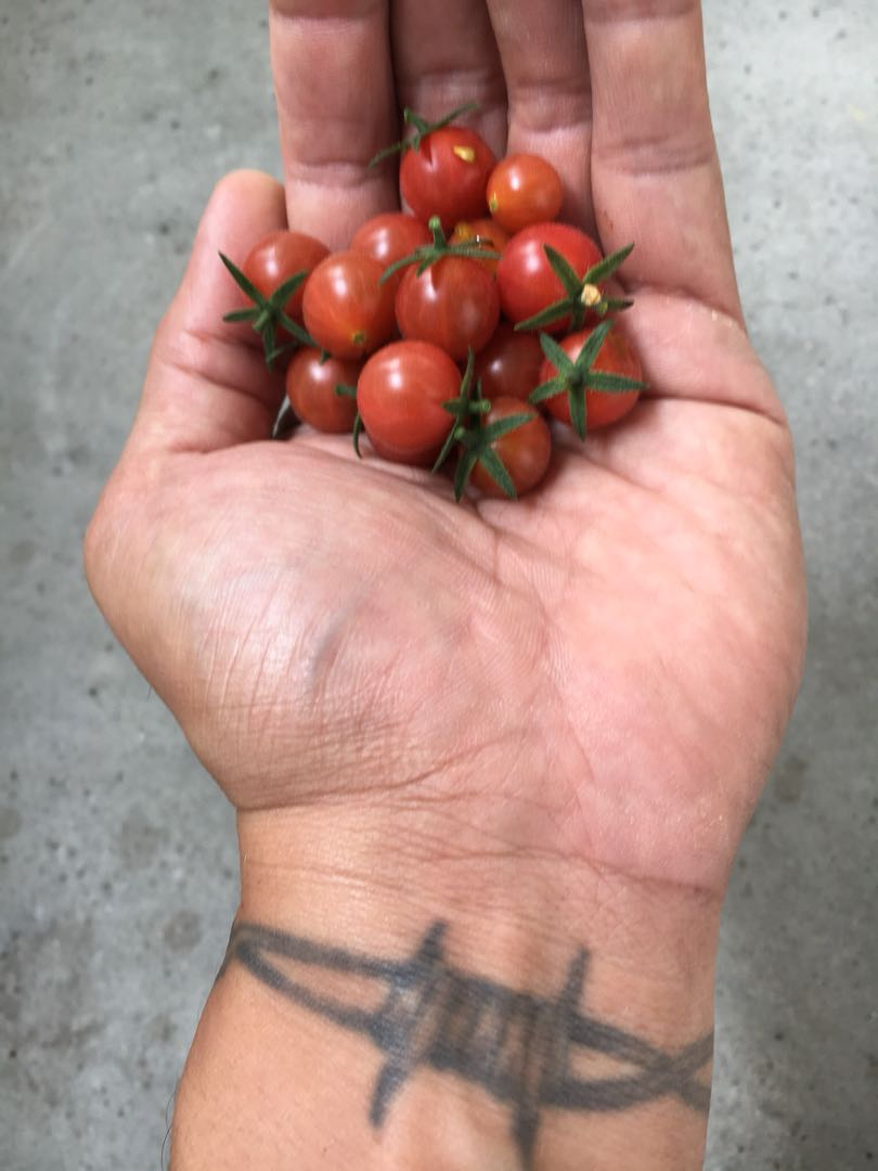 Folks care to share pics of the food that you grow pls