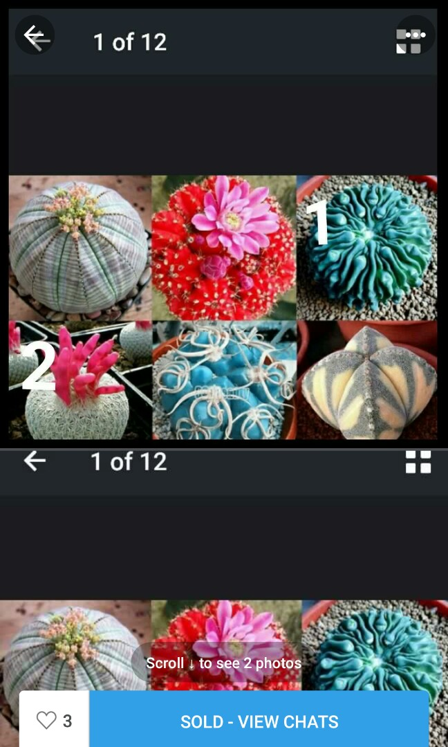 My Cactus so many at home. feel so fun with it.:)
