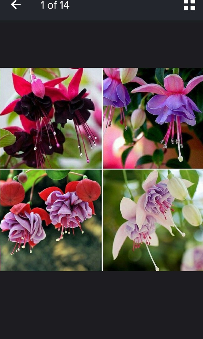 Making Your Garden A Beauty Heaven By Your Own