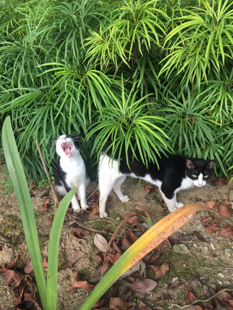Strays near my old home