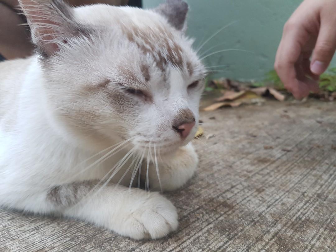 URGENT cat adoption