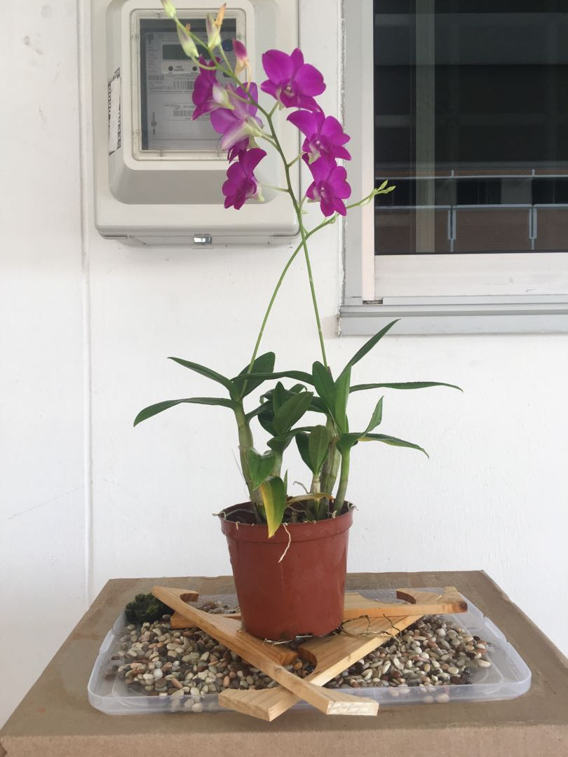 Please teach me tips on Orchid Growing