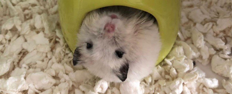 Hamster Lovers