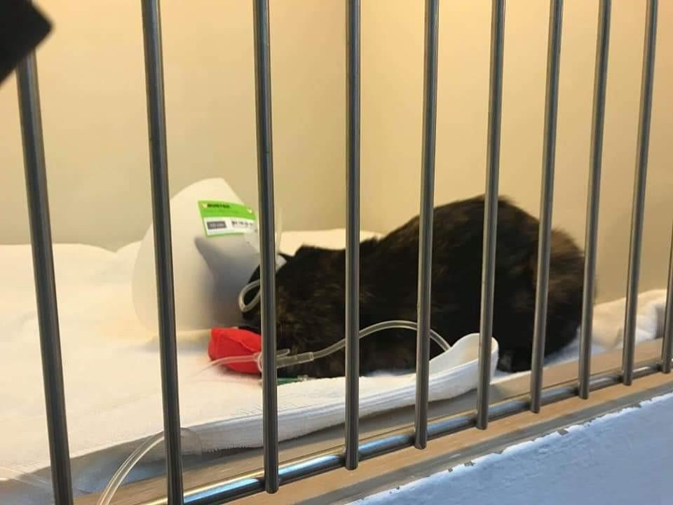 appealing for funds on vet bills