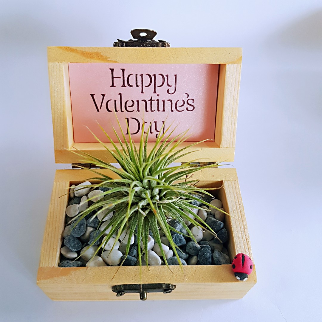 Valentine's Day Gift - Handmade airplant holder with airplant