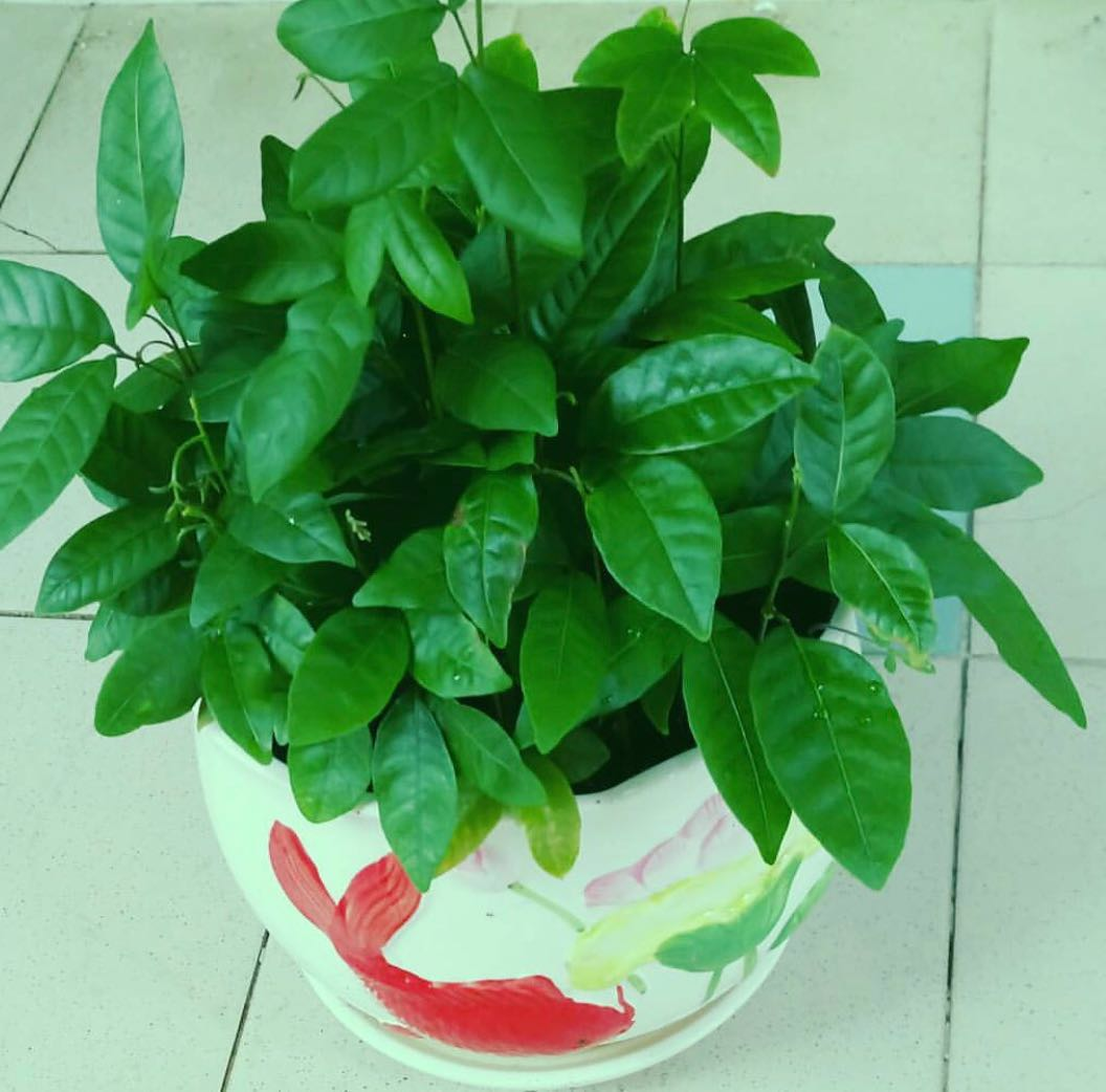 Grow a Plant!