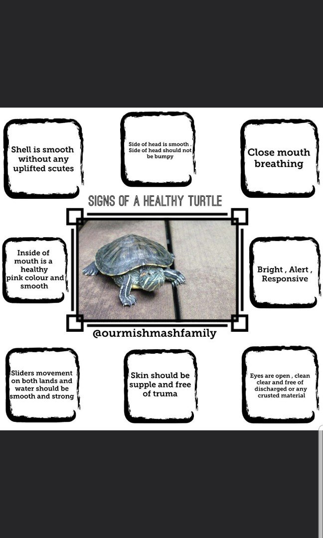 care for terrapins