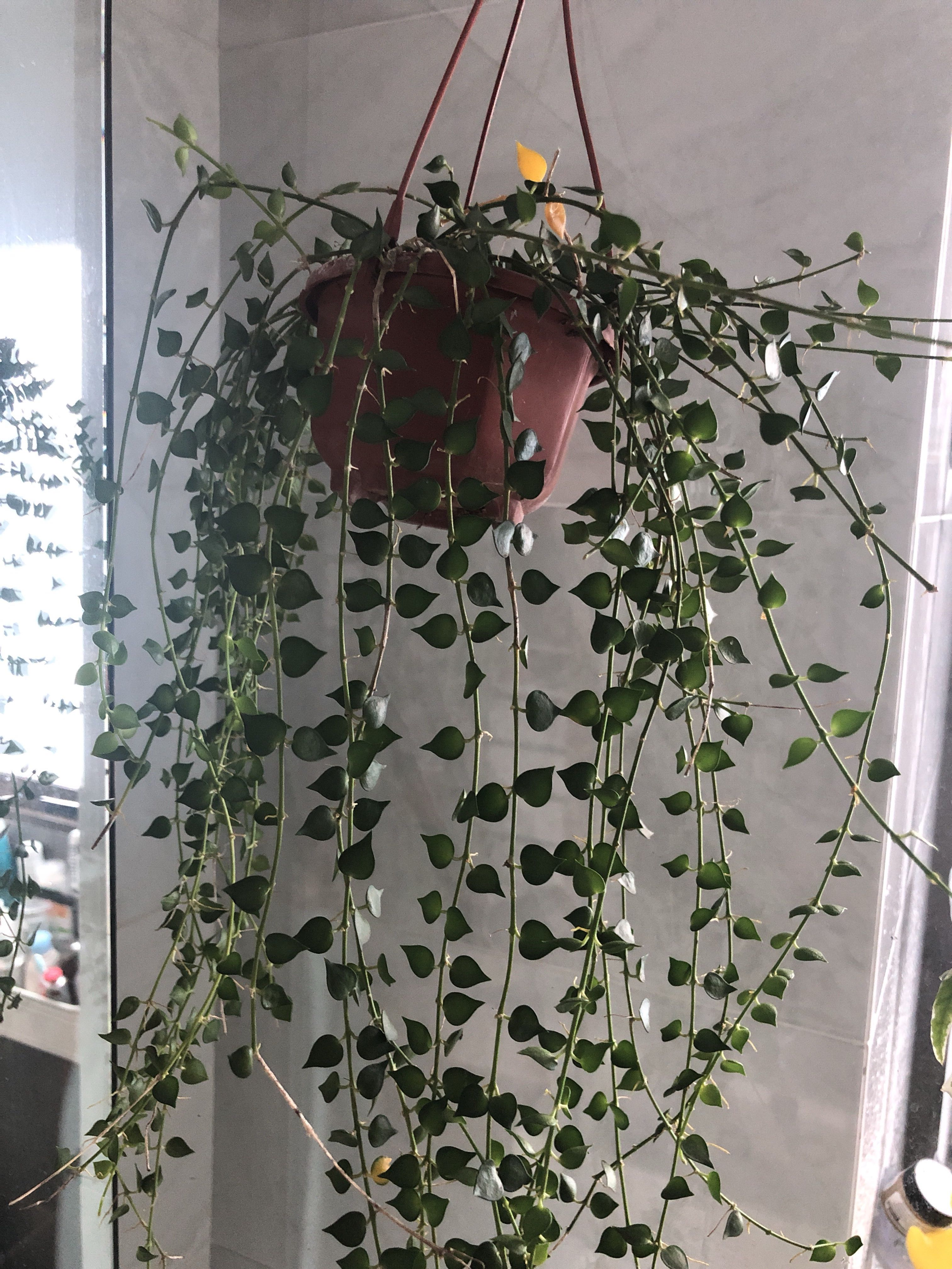What plant is this?