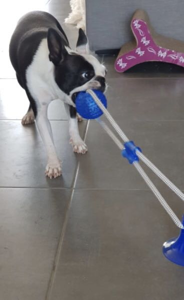 Durable and Safe Dog chew toys for sale!