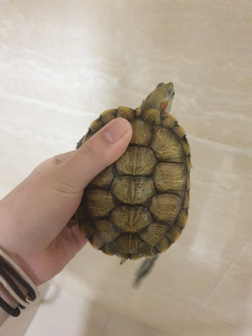 Rehome my Terrapin!