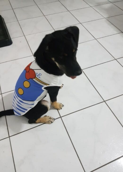 New dog clothes for sale!!!